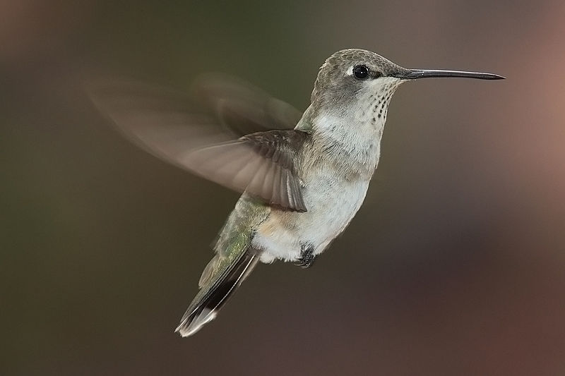 Stand Still Like the Humming Bird (after Charlie Parker)